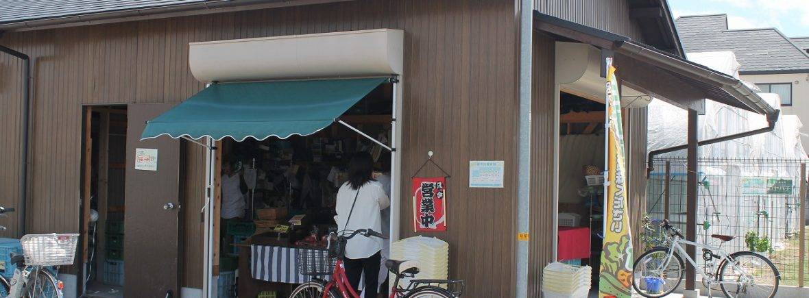 「 koyahachi(コヤハチ)