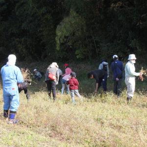 11月3日 ソバの刈り取りと脱穀