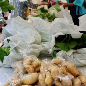 5月25日(土) 地場野菜の即売会 in フラワーフェスティバル