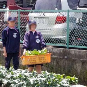 農業にトライ!中学生に地元農業の魅力を引き継ぐ