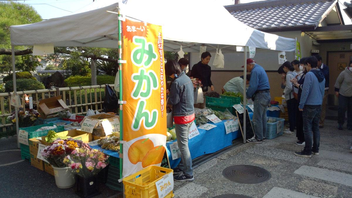 松山果樹園で栽培されている品種は宮川早生と青島温州の2種