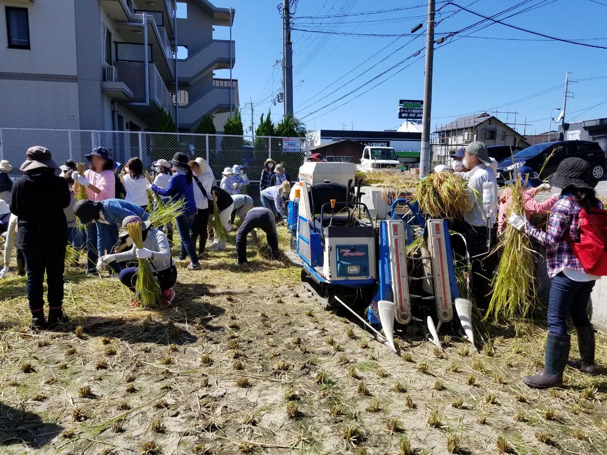 稲の生育と収穫、精米までの過程