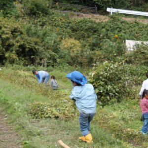10月26日 ソバの収穫