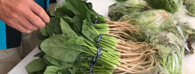 野菜の即売会